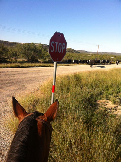 Stop sign image with cattle